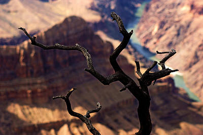 Photograph - Grand Canyon River View by Daniel Woodrum