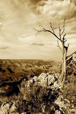 Photograph - Grand Canyon Sepia by T C Brown