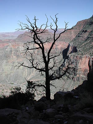 Photograph - Grand Canyon Silhouette by Nancy Taylor