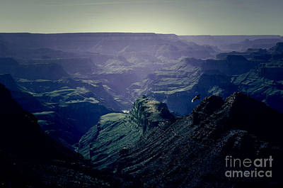Photograph - Grand Canyon Soaring Bird Of Prey Lomo by Shawn O'Brien