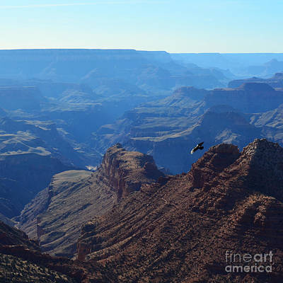 National Park Photograph - Grand Canyon Soaring Bird Of Prey Square by Shawn O'Brien