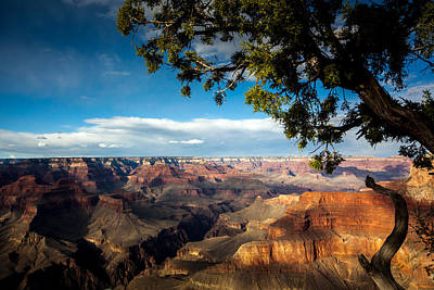 Photograph - Grand Canyon Splendour by Tom Buchanan