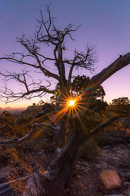 Still Life Photograph - Grand Canyon Sunrise by Michael J Bauer