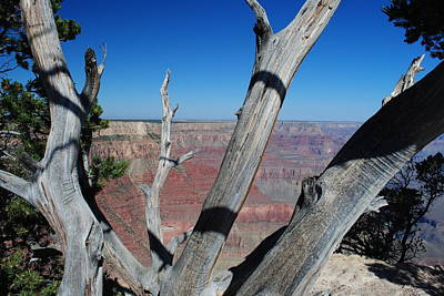 Photograph - Grand Canyon Through The Trees by Robert  Moss