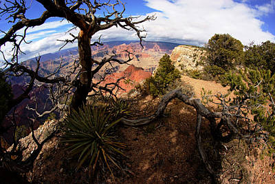 Photograph - Grand Canyon Tree On The Edge by Daniel Woodrum