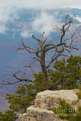 Art Print featuring the photograph Grand Canyon Tree by Rod Wiens