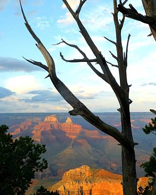 Photograph - Grand Canyon Tree by Toby McGuire