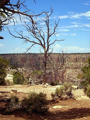 Photograph - Grand Canyon View 6 by Philomena Zito