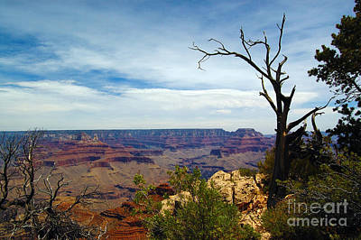 Photograph - Grand Canyon View by Debra Thompson
