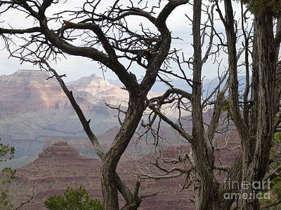 Photograph - Grand Canyon View by Marlene Rose Besso