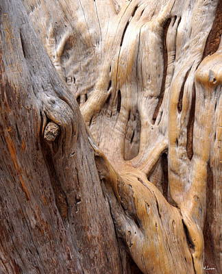 Photograph - Grand Canyon Wood by Wendell Lowe