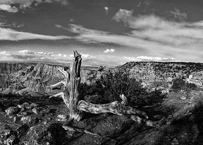 Photograph - Grand Canyon Xxiii Bw by C H Apperson