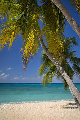 Photograph - Grand Cayman Beach by Brian Jannsen