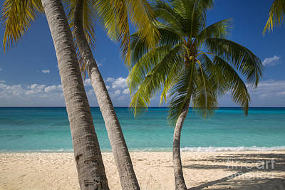 Photograph - Grand Cayman Palms by Brian Jannsen