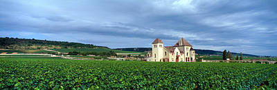 Grapevines Photograph - Grand Cru Vineyard, Burgundy, France by Panoramic Images