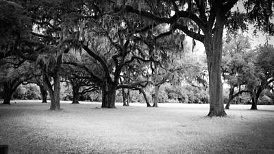 Photograph - Grand Daddy Oaks by Louis Ferreira