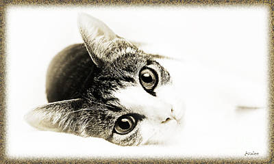 Andee Design Cat Eyes Photograph - Grand Kitty Cuteness 3 High Key by Andee Design