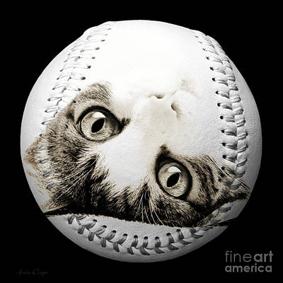 Andee Design Pets Photograph - Grand Kitty Cuteness Baseball Square B W by Andee Design