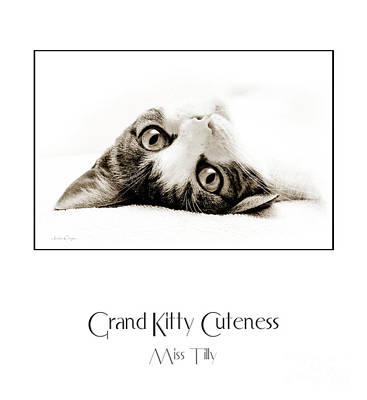Felines Photograph - Grand Kitty Cuteness Miss Tilly Poster by Andee Design