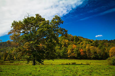 Autumn Landscape Photograph - Grand Oak by Shane Holsclaw