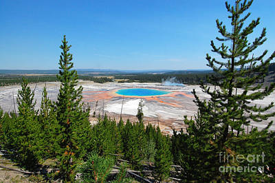 Photograph - Grand Prismatic Between Trees by Debra Thompson