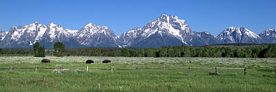 Photograph - Grand Teton Buffalo by Brian Harig