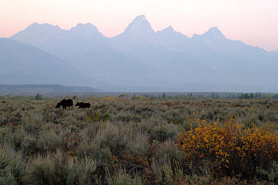 Photograph - Grand Teton Moose by Brian Harig