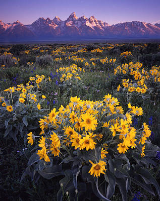 Photograph - Grand Teton Mule Ears by Ray Mathis