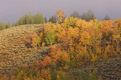 Photograph - Grand Teton National Park by Byron Jorjorian