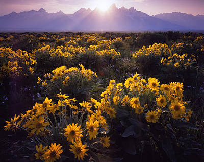 Photograph - Grand Teton Wildflowers by Ray Mathis