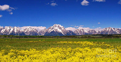 Photograph - Grand Tetons Wildflowers by Allen Beatty