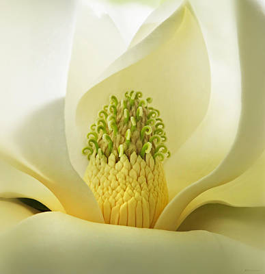 Photograph - Grandiflora Magnolia  by Deborah Smith