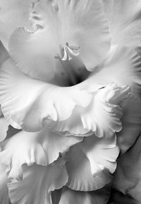 Grandiose Gladiola Flower Monochrome  Art Print by Jennie Marie Schell