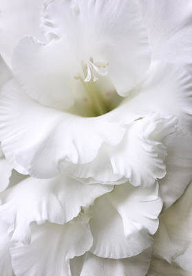 Grandiose White Gladiola Flower Art Print by Jennie Marie Schell