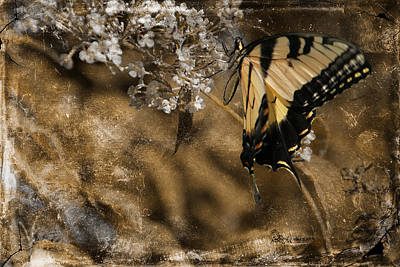 Photograph - Grandma's Butterfly by Ericamaxine Price