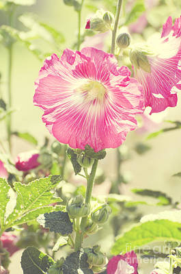 Photograph - Grandma's Hollyhocks by Jim And Emily Bush