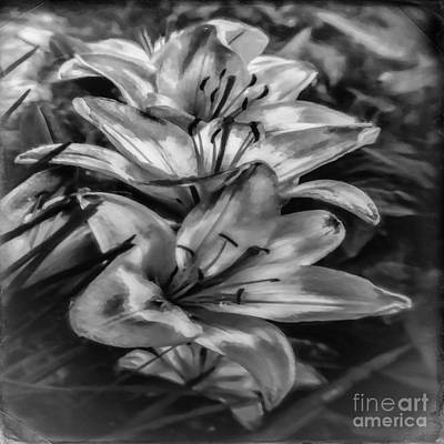 Photograph - Old Fashioned Lilies by Jean OKeeffe Macro Abundance Art