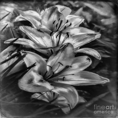 Photograph - Old Fashioned Lilies by Jean OKeeffe Macro Abundance Art