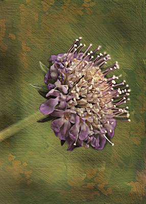 Purple Flowers Digital Art - Grandma's Violet Blossom by Bill Tiepelman