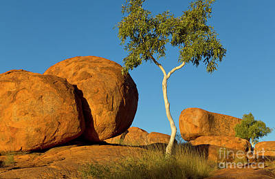 Photograph - Trees And Devils Marbles by Yva Momatiuk John Eastcott