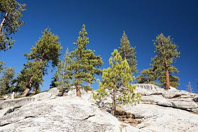 Fir Trees Photograph - Granite Outcrop by Ashley Cooper