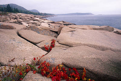Granite Rocks Of Otter Point Acadia Natl Park Maine Art Print by George Oze