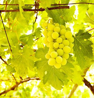Grape Branch Print by Anna Omelchenko