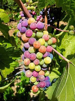 Photograph - Grape Bunch by Jane Girardot