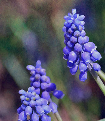 Photograph - Grape Hyacinth  by Deena Stoddard