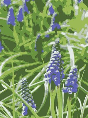 Grape Photograph - Grape Hyacinth by Rachel Vdolek
