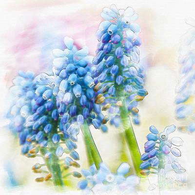 Purple Grapes Digital Art - Grape Hyacinths by Nancy Hebert