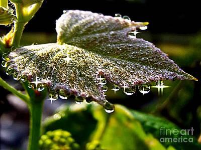 Grape Leaf Dew Original