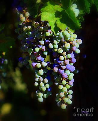 Photograph - Grape Pre-vino by Patrick Witz