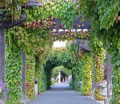 Photograph - Grape Vine Covered Arbor by K L Kingston
